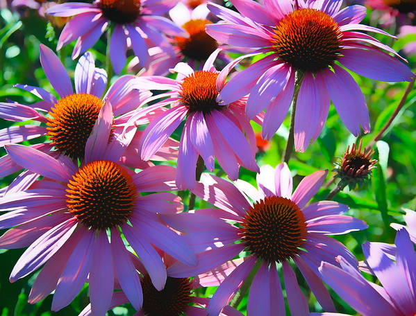Sunflower Art Print featuring the photograph Pretty Flowers by Steve McKinzie
