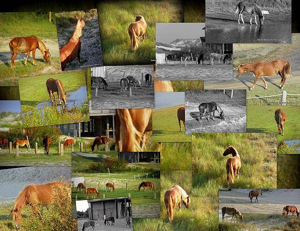 Wild Horses Art Print featuring the photograph Wild Horse Collage by Kim Galluzzo Wozniak