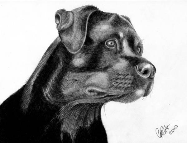 Pencil Art Print featuring the drawing Zak by Chris Cox