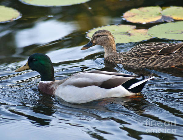 Nature Art Print featuring the photograph Day On The Pond by Alex Garcia