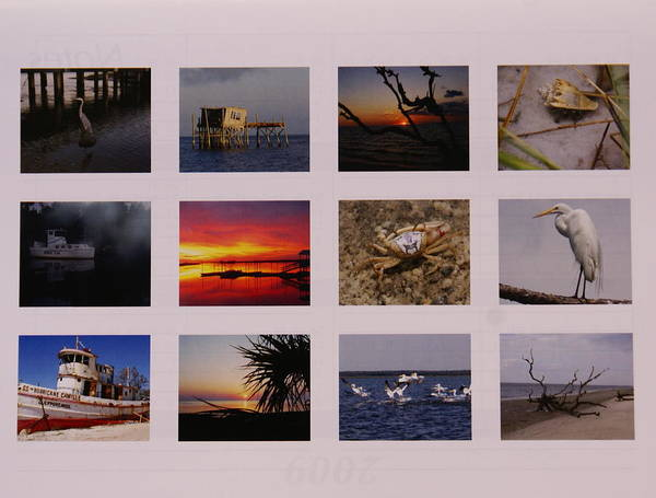 Florida Art Print featuring the photograph 2008 Calendar Back Of Gulf Views Edition by Debbie May