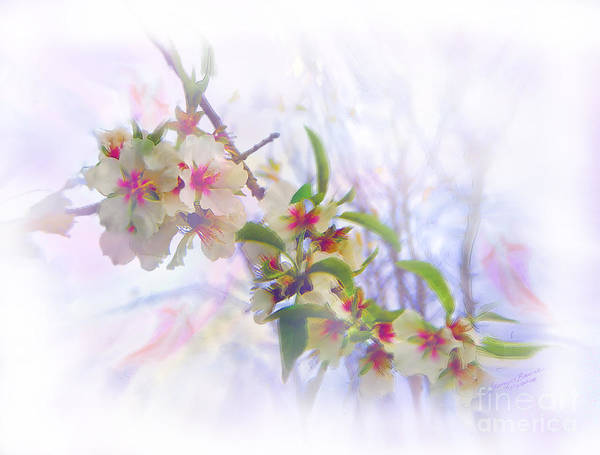 Blossoms Art Print featuring the painting Almond Blossoms by Glenyss Bourne