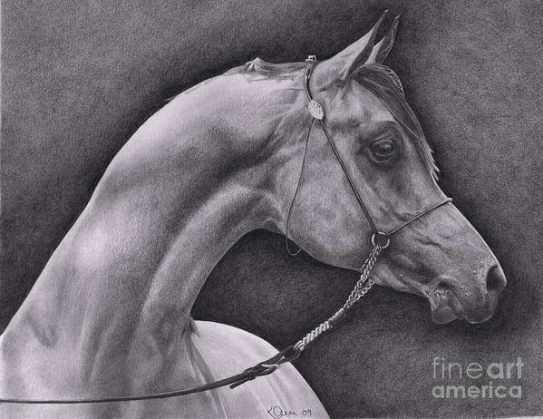 Horse Art Print featuring the drawing Arabian by Karen Townsend