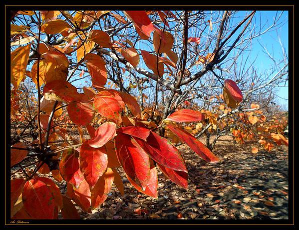 Autumn Art Print featuring the photograph Autumn Colors 06 by Arik Baltinester