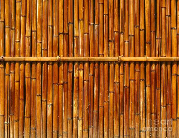 Fence Art Print featuring the photograph Bamboo Fence by Yali Shi