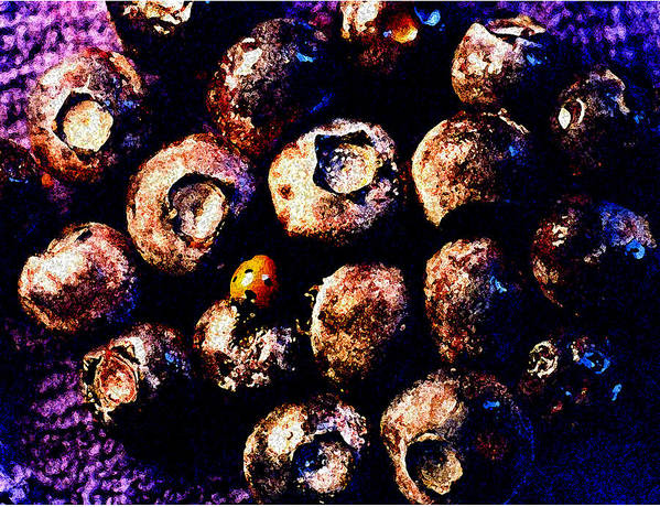Blueberries Art Print featuring the photograph Blueberries And Ladybug by Nancy Mueller