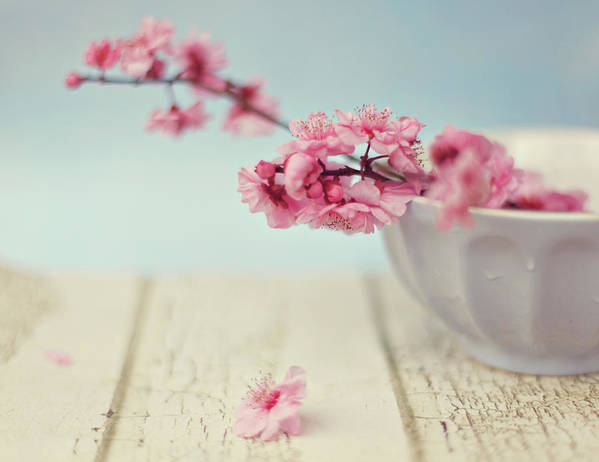 Horizontal Art Print featuring the photograph Cherry Blossoms In Bowl by Hayley Johnson Photography