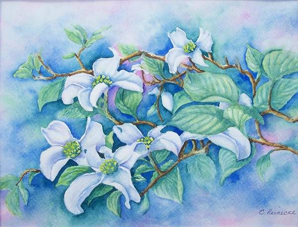 Floral Art Print featuring the painting Dogwood by Conni Reinecke