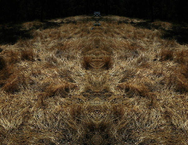 Grass Art Print featuring the photograph Farview 2 by A paul Cartier