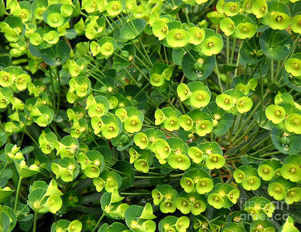 Nature Art Print featuring the photograph Greens And Yellows by Lucyna A M Green
