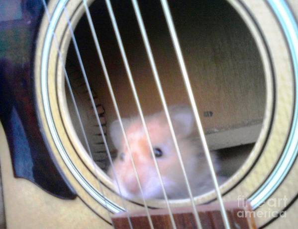 Hamster Art Print featuring the photograph Hamster Strings by Sam Klingensmith