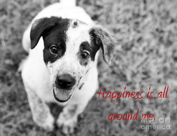 Puppy Art Print featuring the photograph Happiness Is All Around Me by Amanda Barcon