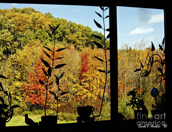 Fall Art Print featuring the photograph Inside Looking Outside At Fall Splendor by Carol F Austin