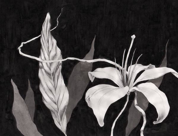 Ink Painting Art Print featuring the drawing Lily In The Night by Jennifer McDuffie