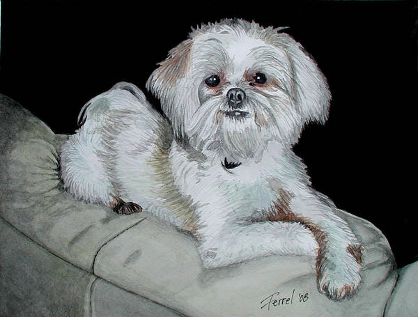 Dog Art Print featuring the painting Miki Dog by Ferrel Cordle