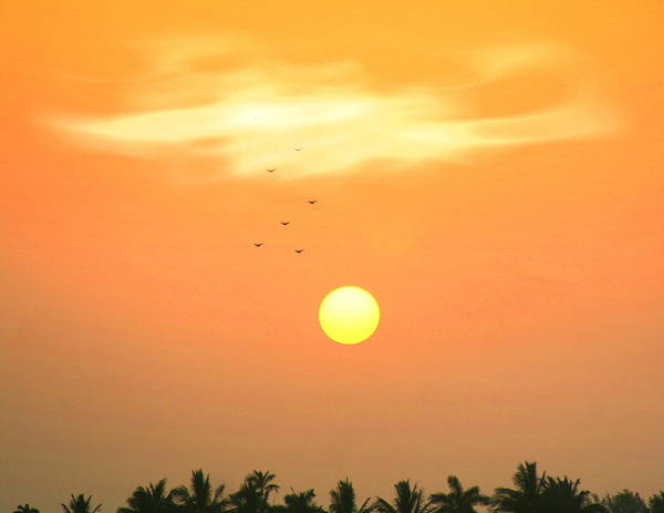 Sunrise Art Print featuring the photograph Morning Flight by Diane Merkle