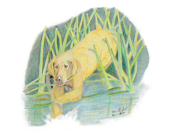 Dan Shuford Art Print featuring the drawing Old Yeller by Daniel Shuford