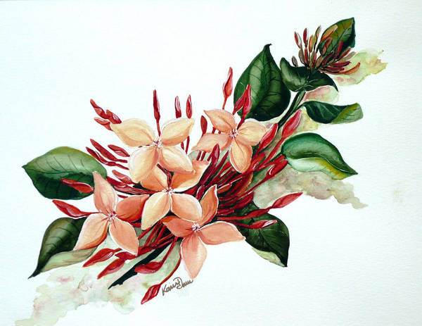 Floral Peach Flower Watercolor Ixora Botanical Bloom Art Print featuring the painting Peachy Ixora by Karin Dawn Kelshall- Best