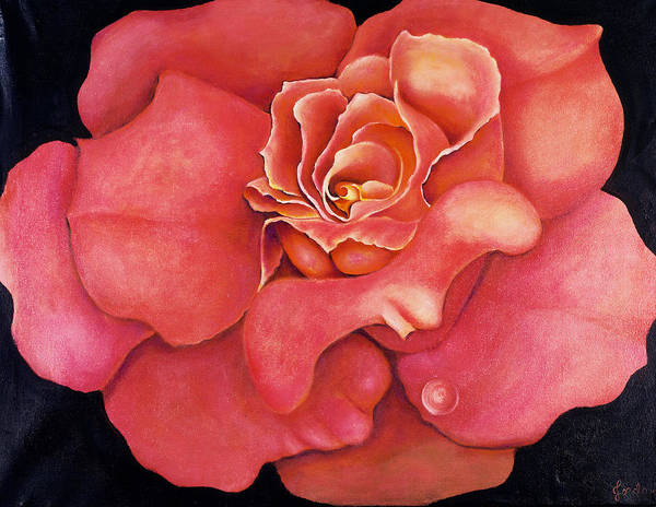 Rose.bloom Art Print featuring the painting Pink Blush by Jordana Sands