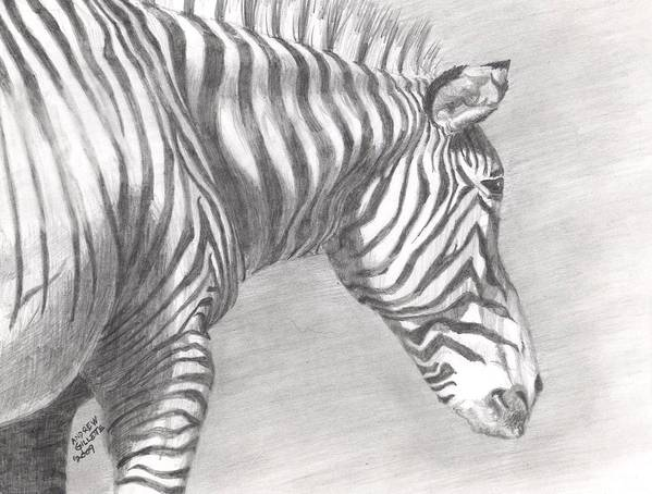 Zebra Art Print featuring the drawing Scanning The Horizon by Andrew Gillette