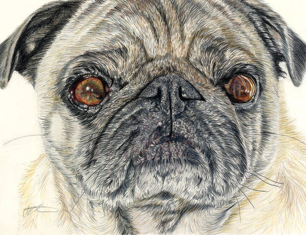 Dogs Art Print featuring the drawing Stanley by Joanne Stevens