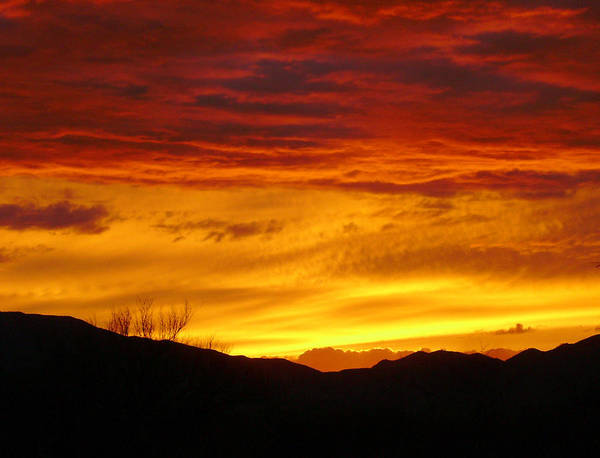 Sunset Art Print featuring the photograph Sunset Solitude by Kathleen Nash