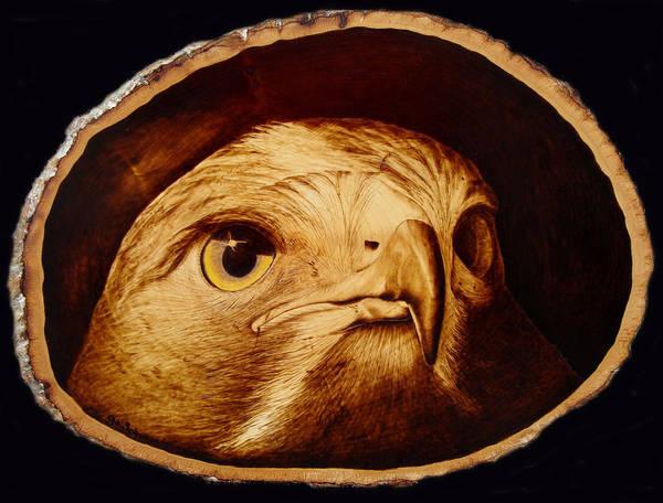 Woodburning; Pyrogrography; Sepia; Hawk; Bird Of Prey; Nature; Bird; Beak; Talon Art Print featuring the pyrography The Spotter by Jo Schwartz