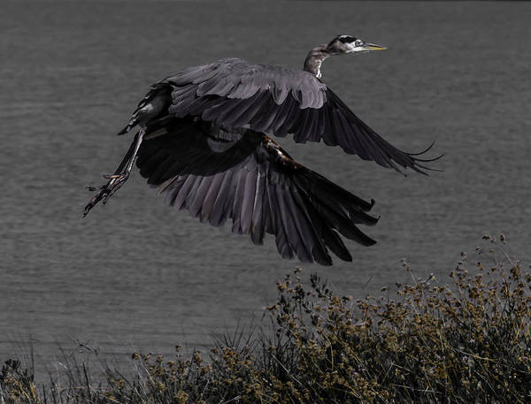 Bird Art Print featuring the photograph The Take Off by Leticia Latocki
