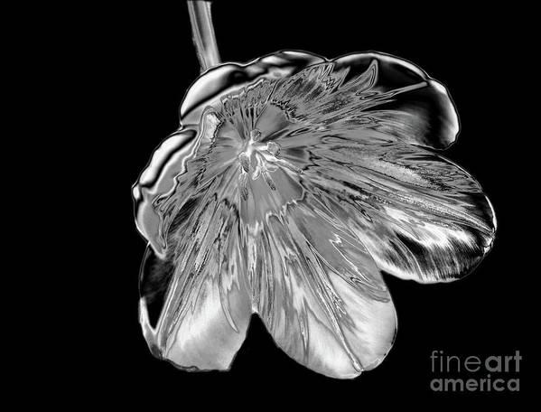 Tulip Art Print featuring the photograph Tulip Liquid Metal by Elaine MacKenzie