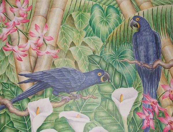 Tropical Landscape Flower Bird Art Print featuring the drawing Two Macaws by Jubamo