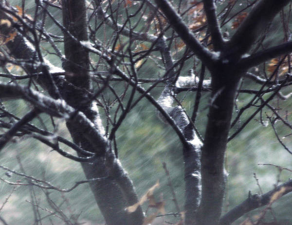 Snow Art Print featuring the photograph Winter In Texas by Adrianne OConnor