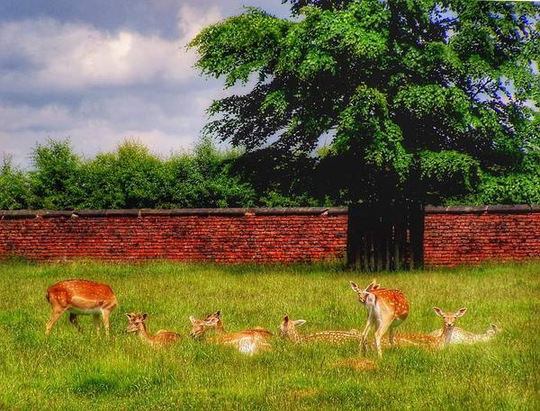 Deer Art Print featuring the photograph Work Day Out by Abbie Shores
