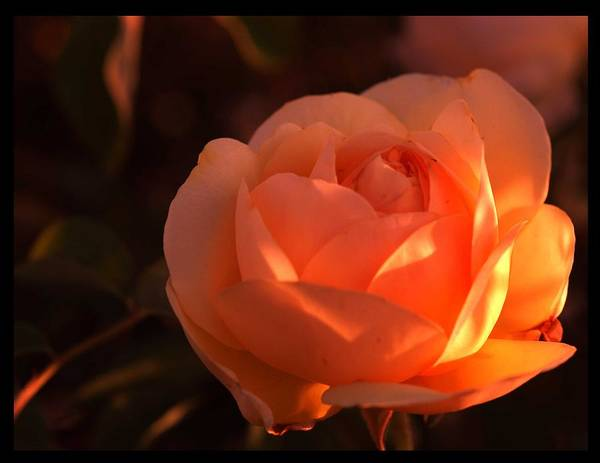 Flowers Art Print featuring the photograph Warm Sun by Richard Gordon