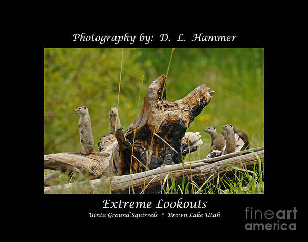 Wildlife Art Print featuring the photograph Extreme Lookouts by Dennis Hammer