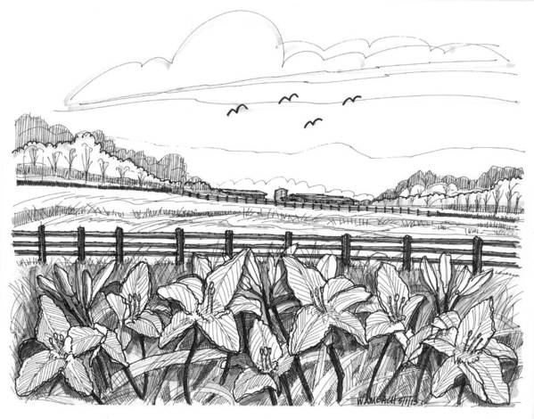 Day Lilies Art Print featuring the drawing Day Lilies At Northwind Farms by Richard Wambach