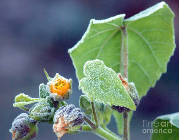 Frost Art Print featuring the photograph Early Morning Frost by Optical Playground By MP Ray