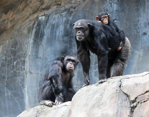 These Three Appeared To Be Posing For A Portrait. Art Print featuring the photograph Family Portrait by Cheryl Del Toro