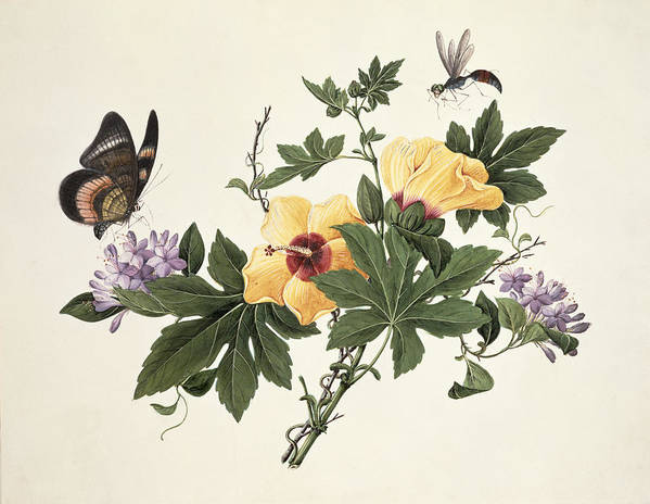 Flower Art Print featuring the painting Hibiscus And Butterfly by Chinese School
