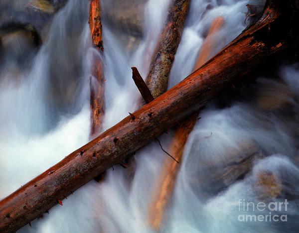 Beauty Creek Print featuring the photograph Jasper - Beauty Creek Logs by Terry Elniski