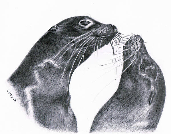 Sea Lion Art Print featuring the drawing Lions by Lucy D
