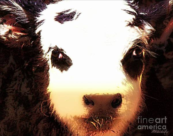Angus Calf Art Print featuring the photograph Little Black Baldy by Barbara Chichester