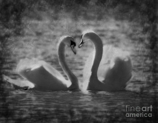 Festblues Art Print featuring the photograph Love Is.. by Nina Stavlund
