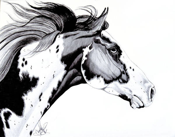 Horse Art Art Print featuring the drawing Overo Paint Horse by Cheryl Poland
