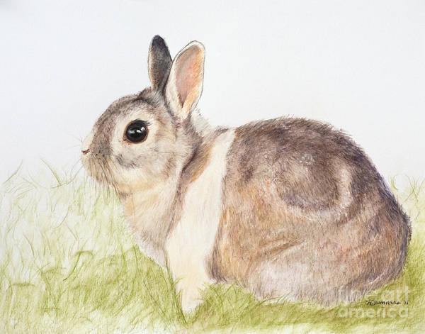 Rabbit Art Print featuring the painting Pastel Pet Rabbit by Kate Sumners