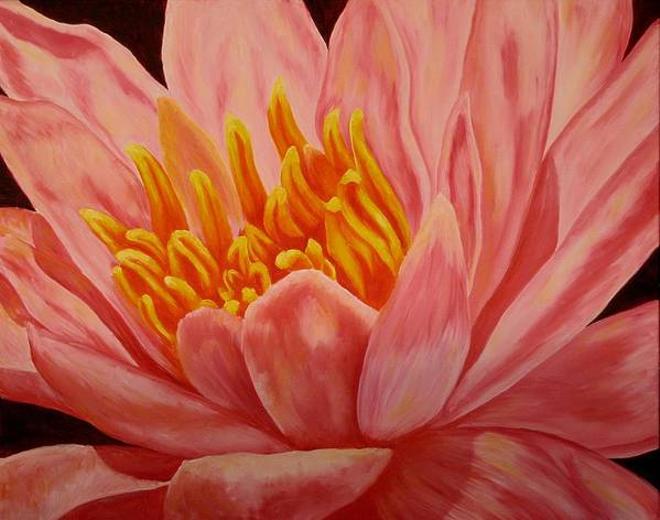 Oil Art Print featuring the painting Pink Waterlily by Darla Brock