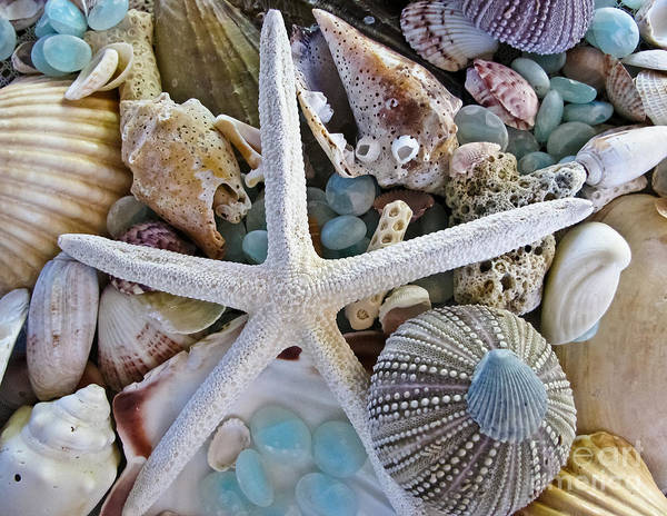 Seashells Art Print featuring the photograph Sea Treasure by Colleen Kammerer
