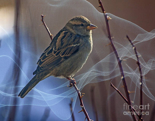 Sparrow Art Print featuring the photograph Sparrow In A Weave by Janice Pariza