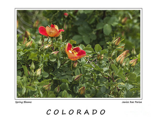 Garden Art Print featuring the photograph Spring Blooms In Colorado by Janice Pariza