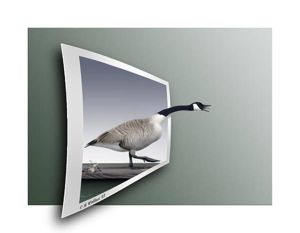 2d Art Print featuring the photograph Take A Gander by Brian Wallace