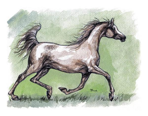 Horse Art Print featuring the painting The Grey Arabian Horse 8 by Angel Ciesniarska